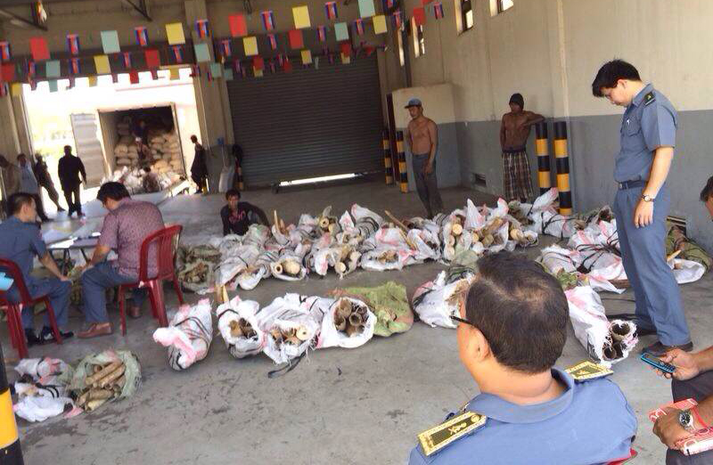 Customs officials inspect more than three tons of ivory found inside two shipping containers at Sihanoukville Autonomous Port on Friday morning. (Chum Phearum)