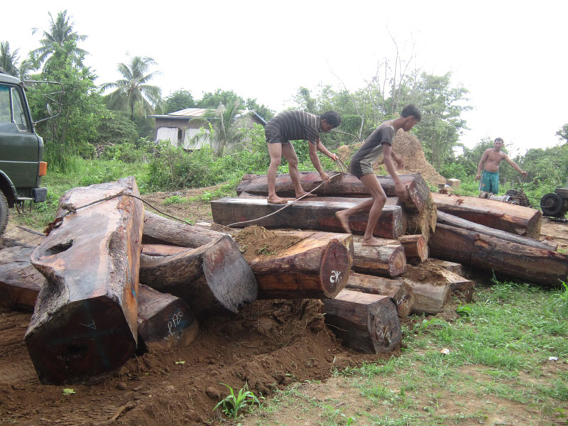 Loggers who claim to work for timber magnate Try Pheap unfasten a winch from a load of luxury Thnong timber after it was dragged up the bank of the Sekong River in Stung Treng province's Siem Pang district last week. (Matt Blomberg/The Cambodia Daily)