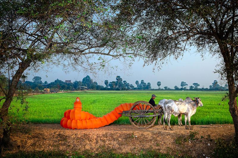 'Ox Cart Grazing,' part of Anida Yoeu Ali's contemporary art project, 'The Buddhist Bug'