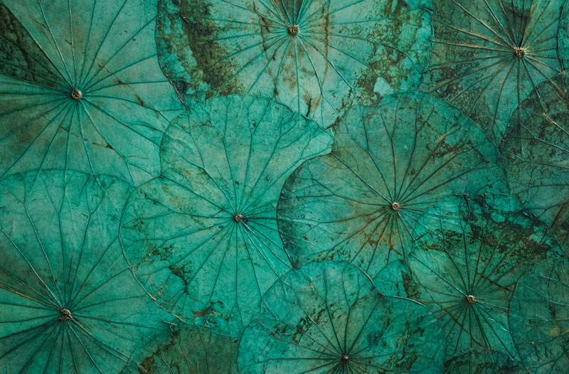 A painting from the 'Lotus Inspiration' exhibit by Teck Inthavong and Catherine Cajean, currently on display at TeaHouse Hotel in Phnom Penh (Alicia Guthert)