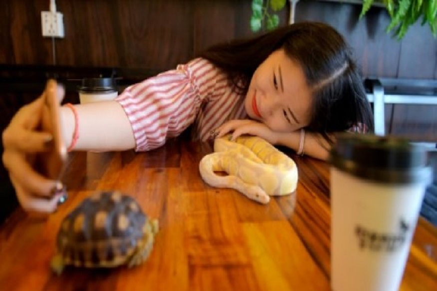 Cambodia's First Reptile-themed Cafe Slithers into People's Hearts - The  Cambodia Daily
